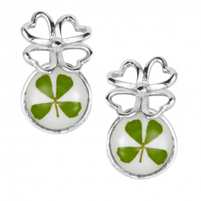 Real Four Leaf Clover for Faith Hope Love and Luck